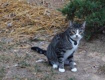 Γραπτή γάτα γατακιών Στοκ Εικόνα