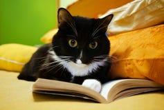 Γραπτή γάτα και ανοικτό βιβλίο στοκ εικόνες