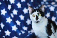 Γραπτή γάτα μπροστά από ένα μπλε κάλυμμα αστεριών Στοκ Εικόνες