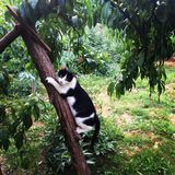 Γραπτή γάτα σε ένα δέντρο Στοκ φωτογραφία με δικαίωμα ελεύθερης χρήσης