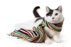 Γραπτή γάτα σε ένα πολύχρωμο ριγωτό μαντίλι Στοκ φωτογραφία με δικαίωμα ελεύθερης χρήσης