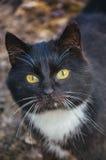Γραπτή γάτα στο ναυπηγείο Στοκ Εικόνες