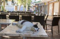Γραπτή γάτα της Ρόδου που βρίσκεται και που κοιμάται στον πίνακα στο εστιατόριο, αστεία σκηνή, φως του ήλιου Στοκ Φωτογραφία