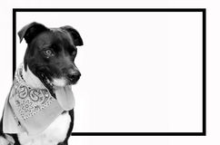 Γραπτή εικόνα σκυλιών κατοικίδιων ζώων με το μαύρο πλαίσιο Χαριτωμένο κουτάβι με την κορδέλα επάνω Στοκ Φωτογραφία