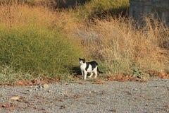 Γραπτή ημι-άγρια γάτα της Ρόδου Στοκ φωτογραφία με δικαίωμα ελεύθερης χρήσης
