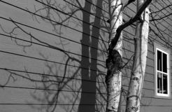 Γραπτή μελέτη του δέντρου στο κέντρο της πόλης Breckenridge Κολοράντο σε Wintertime στοκ εικόνα με δικαίωμα ελεύθερης χρήσης