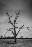 Γραπτή σκηνή coountryside ενός άγονου δέντρου Στοκ φωτογραφία με δικαίωμα ελεύθερης χρήσης