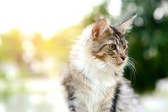 Γραπτή τιγρέ γάτα κινηματογραφήσεων σε πρώτο πλάνο που εξετάζει την πλευρά στον κήπο Στοκ Εικόνες