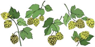 Γραπτή χαραγμένη τέχνη μελανιού πράσινο φύλλο Φυτό φύλλων βοτανικό απεικόνιση αποθεμάτων
