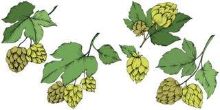 Γραπτή χαραγμένη τέχνη μελανιού πράσινο φύλλο Φυτό φύλλων βοτανικό ελεύθερη απεικόνιση δικαιώματος