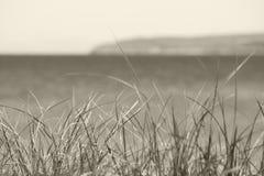 Γραπτή χλόη αμμόλοφων με το Μίτσιγκαν lakeshore Στοκ Φωτογραφίες