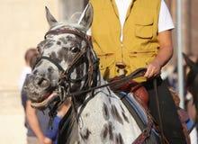 Γραπτοί άλογο και κάουμποϋ Στοκ Εικόνες