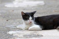 Γραπτός καθορισμός γατών και ιδιαίτερες προσοχές στο συγκεκριμένο έδαφος Στοκ φωτογραφία με δικαίωμα ελεύθερης χρήσης