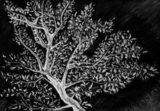 Γραπτός μονοχρωματικός κλάδος δέντρων στον ουρανό ελεύθερη απεικόνιση δικαιώματος