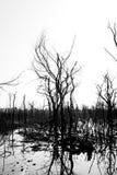Γραπτός των ξηρών νεκρών δέντρων Στοκ Φωτογραφία