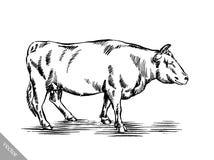 Γραπτός χαράξτε την απομονωμένη αγελάδα Στοκ Φωτογραφία