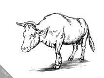 Γραπτός χαράξτε την απομονωμένη αγελάδα Στοκ εικόνες με δικαίωμα ελεύθερης χρήσης
