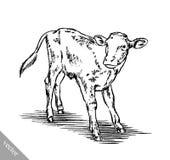 Γραπτός χαράξτε την απομονωμένη αγελάδα Στοκ Φωτογραφίες