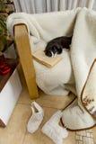 Γραπτός ύπνος γατών σε μια καρέκλα στο παλαιό βιβλίο Στοκ φωτογραφίες με δικαίωμα ελεύθερης χρήσης