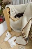 Γραπτός ύπνος γατών σε μια καρέκλα στο παλαιό βιβλίο Στοκ Εικόνα