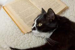 Γραπτός ύπνος γατών στο παλαιό βιβλίο Στοκ εικόνα με δικαίωμα ελεύθερης χρήσης