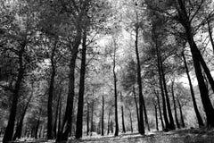 Γραπτό δάσος στοκ εικόνα με δικαίωμα ελεύθερης χρήσης
