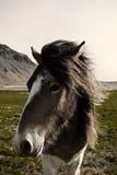 Γραπτό άλογο Στοκ Φωτογραφίες