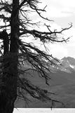Γραπτό δέντρο Στοκ Εικόνα