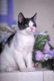 Γραπτό γατάκι Στοκ Εικόνες
