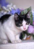 Γραπτό γατάκι Στοκ εικόνες με δικαίωμα ελεύθερης χρήσης
