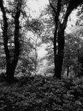 Γραπτό δάσος Στοκ Εικόνες