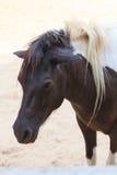 Γραπτό επικεφαλής άλογο Στοκ Εικόνες