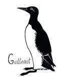 Γραπτό διάνυσμα Guillemot συλλογής πουλιών Στοκ φωτογραφίες με δικαίωμα ελεύθερης χρήσης