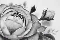 Γραπτό λουλούδι τριαντάφυλλων Έργα ζωγραφικής Watercolor Στοκ φωτογραφία με δικαίωμα ελεύθερης χρήσης
