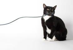 Γραπτό παιχνίδι γατών με τη σειρά στοκ εικόνες