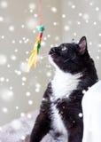 Γραπτό παιχνίδι γατών με το παιχνίδι φτερών Στοκ εικόνες με δικαίωμα ελεύθερης χρήσης
