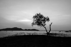 Γραπτό τοπίο του δέντρου στο νερό με το υπόβαθρο βουνών στη δεξαμενή Sriracha, Chonburi, Ταϊλάνδη Phra κτυπήματος Στοκ Εικόνες