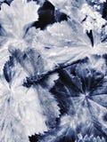 γραπτό φύλλο λιβελλουλών φωτογραφίας Στοκ Φωτογραφίες