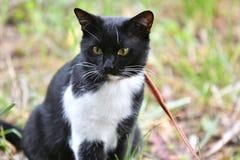 Γραπτό χρώμα γατών Στοκ εικόνες με δικαίωμα ελεύθερης χρήσης