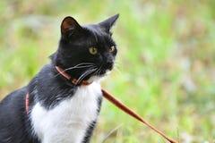 Γραπτό χρώμα γατών Στοκ Εικόνα