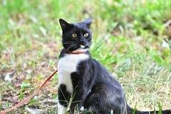 Γραπτό χρώμα γατών Στοκ Εικόνες
