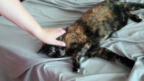 Γρατσουνίζοντας κεφάλι της γάτας φιλμ μικρού μήκους