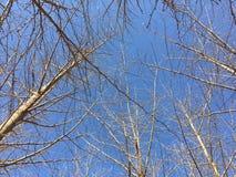 Γραφικά δέντρα και τοπία φωτογραφιών στην οδό στοκ φωτογραφίες
