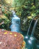 Γραφικά ρεύματα στα τροπικά δάση του Όρεγκον ` s στοκ εικόνες με δικαίωμα ελεύθερης χρήσης
