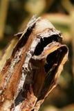 Γραφικά φύλλα της αγαύης Στοκ Φωτογραφία