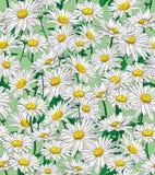 Γραφική άνευ ραφής σύνθεση, chamomile σχέδιο ελεύθερη απεικόνιση δικαιώματος