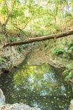 Γραφική λίμνη στο δάσος στοκ εικόνες