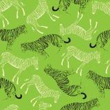 Γραφική τίγρη σχεδίου με το ζέβες γραπτό σκίτσο διανυσματική απεικόνιση