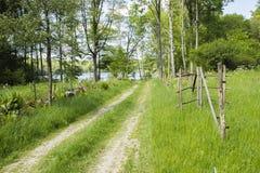 Γραφικός βρώμικος δρόμος στη λίμνη Στοκ Φωτογραφία