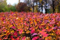 Γραφικός διαχωριστικός φράχτης φθινοπώρου Στοκ Εικόνα